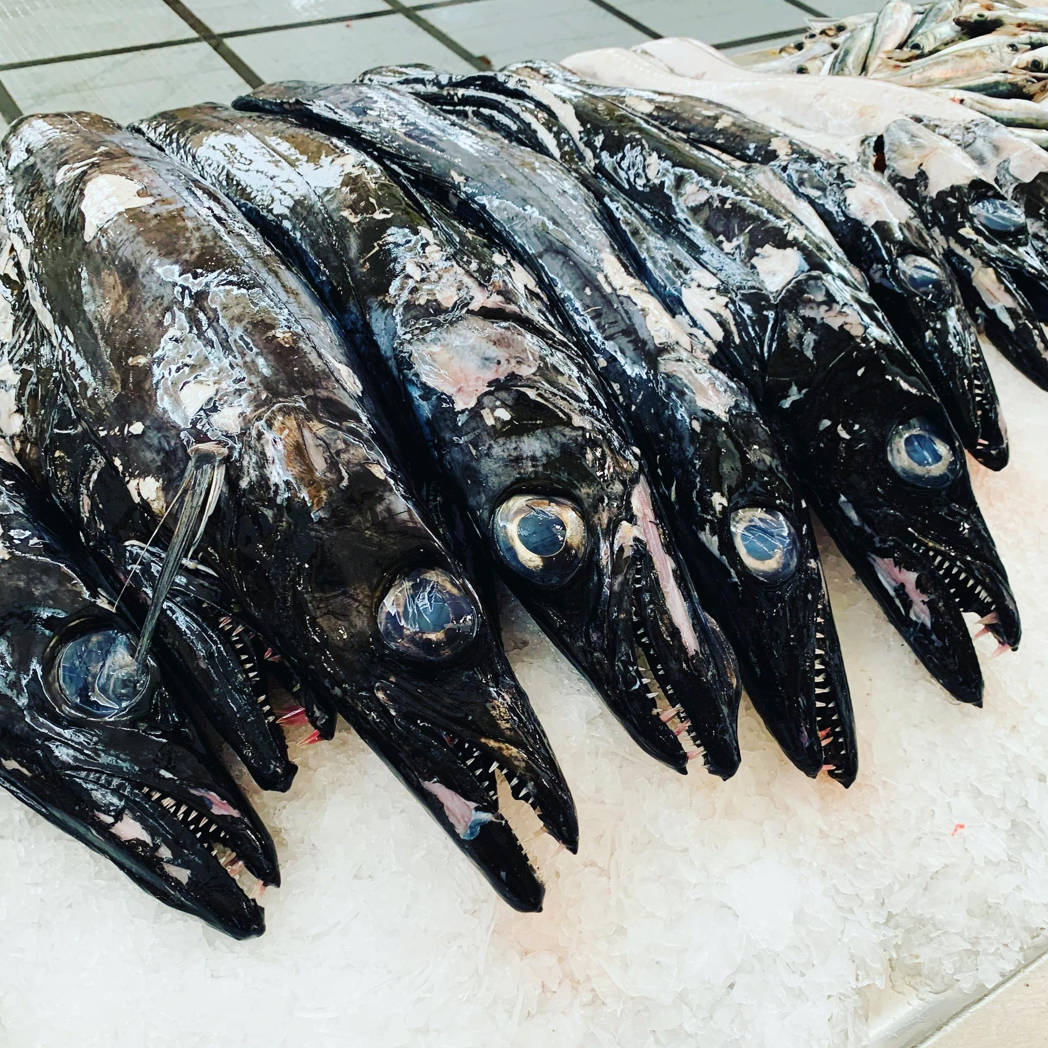 Espada Preto - czyli pałasz czarny żyjący w Oceanie Atlantyckim pomiędzy 69 N a 27 N na głębokości od 200 do 1700 m. Ryba drapieżna, która w nocy w toni wodnej wynurza się do głębokości około 200 m aby żerować. Żywi się rybami, skorupiakami i głowonogami. Przepyszna ryba, która tradycyjnie podawana jest ze smażonym bananem na Maderze. Mniam 😋 Zawsze podczas wycieczki Zachód jemy Lunch w lokalnej restauracji w São Vincente Ferro Velho. #maderaryszardbaraban #madeiranowordsneeded #madeira #ryszardmadera #przewodnik #guide #polskiprzewodniknamaderze #wycieczki #polskiewycieczki #pałasz #espadapreto #ryby #rybydrapiezne #travel #visitmadeira #instatravel #oceanatlantycki #portugal #portugalia #polskadziewczyna #polskichłopak #warsawgirl #warsawboy #katowicegirl #katowiceboy #połowy